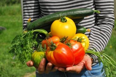 vegetables-742095_1280 (1)